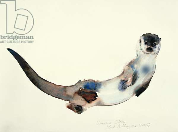 Curious Otter, 2003 (w/c on paper)