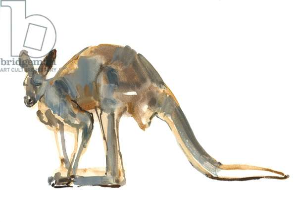 Ochre Dusted, (Red Kangaroo), 2012, (watercolour and pigment on paper)