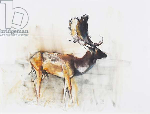 Magnificent Fallow Buck, 2006 (charcoal & conte on paper)