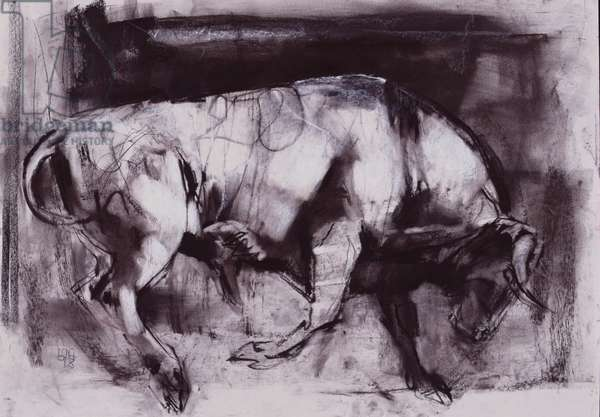 The White Bull (study), 1998 (charcoal on paper)