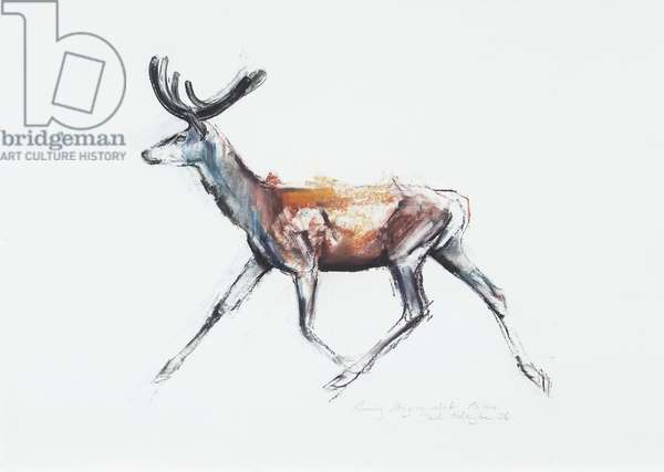 Running Stag in velvet, Polsen, 2006 (charcoal & conte on paper)