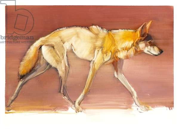 Arabian Wolf, 2010 (oil on paper)
