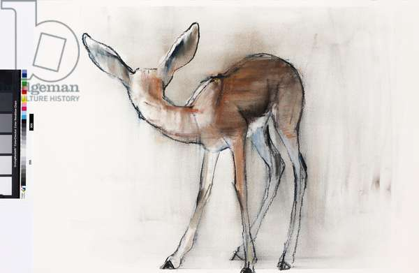 Gazelle Fawn (Arabian Gazelle) 2010 (oil on paper)