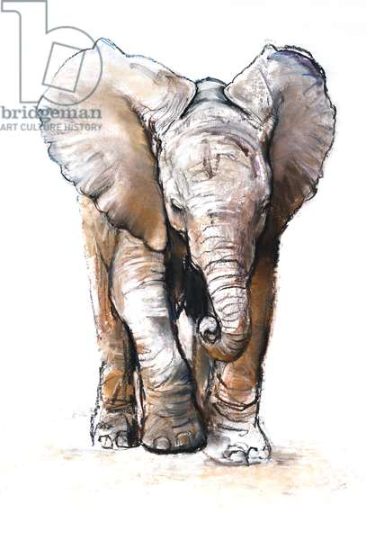 Concentration (baby elephant), 2018, (conté and pastel on paper)