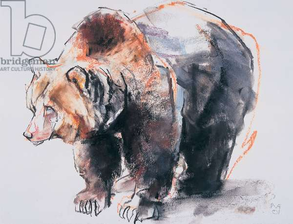 European Brown Bear, 2001 (charcoal & conte on paper)