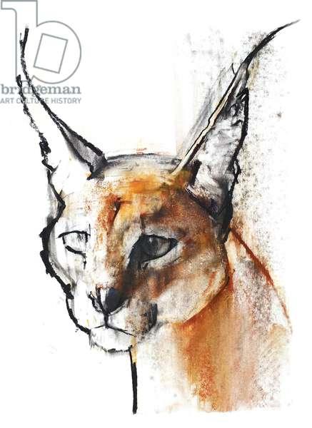 Feline (Arabian Caracal), 2009 (conte & charcoal on paper)