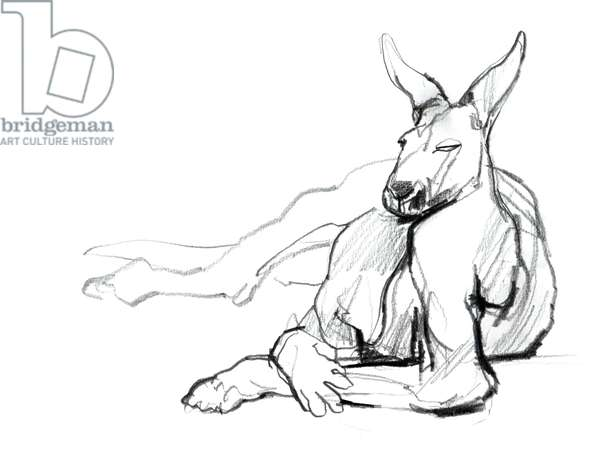 Resting Athlete (Red Kangaroo), 2012, (graphite on paper)