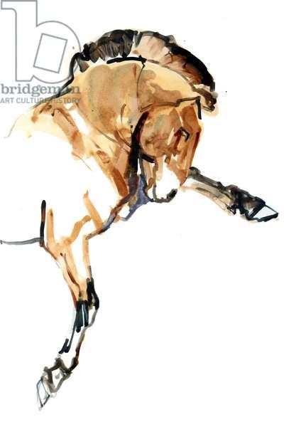 Stallion (Przewalski), 2013 (sennelier ink, watercolour and gouache)