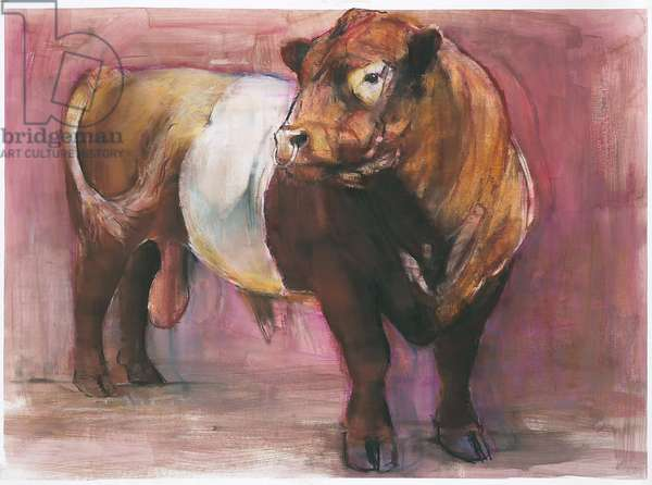 Zeus, Red Belted Galloway Bull, 2006 (mixed media on paper)