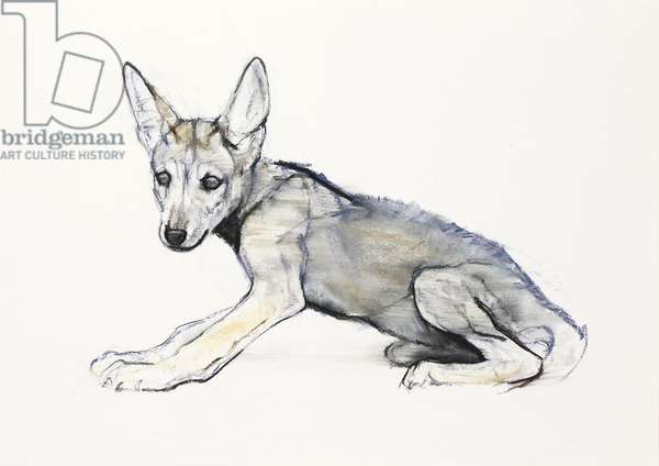 Adolescent Arabian Wolf Pup, 2009 (conte & charcoal on paper)
