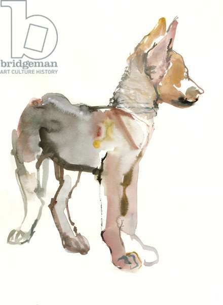 Waggle (Arabian Wolf Pup), 2011, (watercolour and gouache on paper)