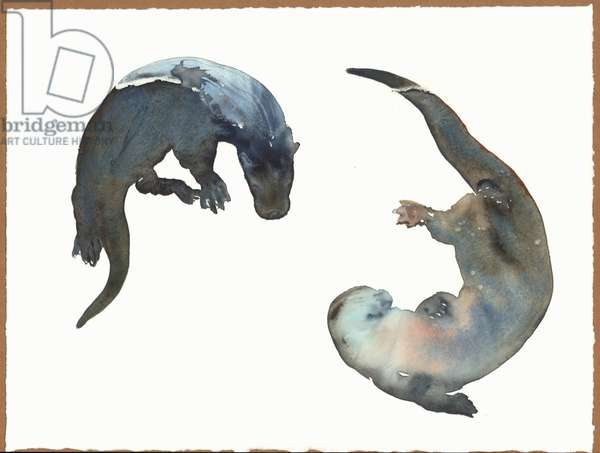 Synchronised Swimming, 2014, (watercolour on paper)