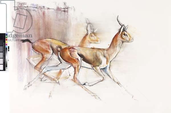 Running Arabian Gazelles, 2010 (oil on paper)