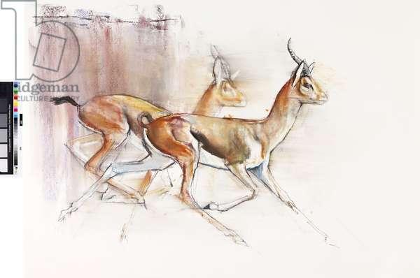 Running Arabian Gazelles, 2010 (oil on paper)