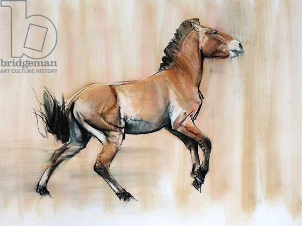 Young Stallion (Przewalski), 2014, (pastel and charcoal on paper)