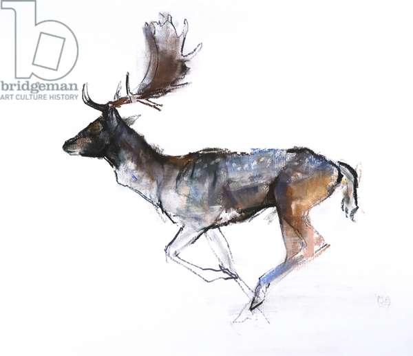 Evening Buck (Fallow deer), 2007, (pastel and conté on paper)