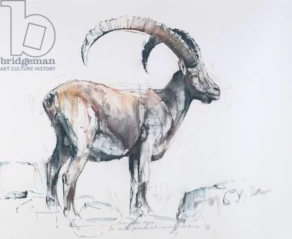 Venerando Stambecco, 2006 (charcoal & conte on paper)