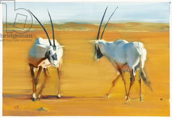 Circling Arabian Oryx, 2010 (oil on paper)
