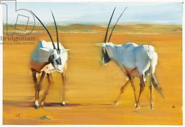 Circling Arabian Oryx, 2010 (oil on paper)