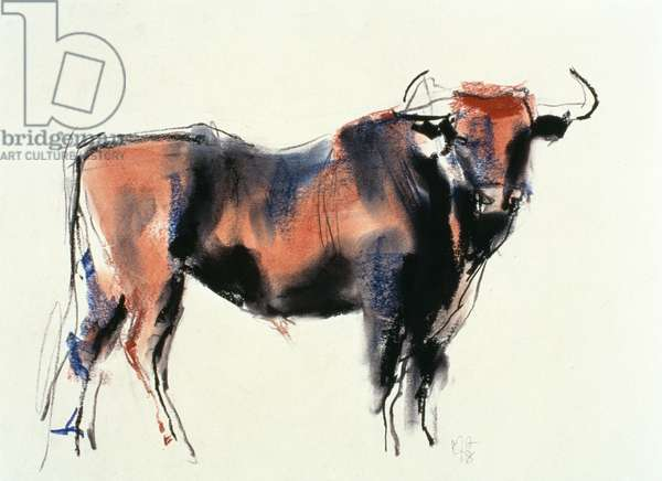 Red Bull, 1998 (graphite, conte and charcoal on paper)