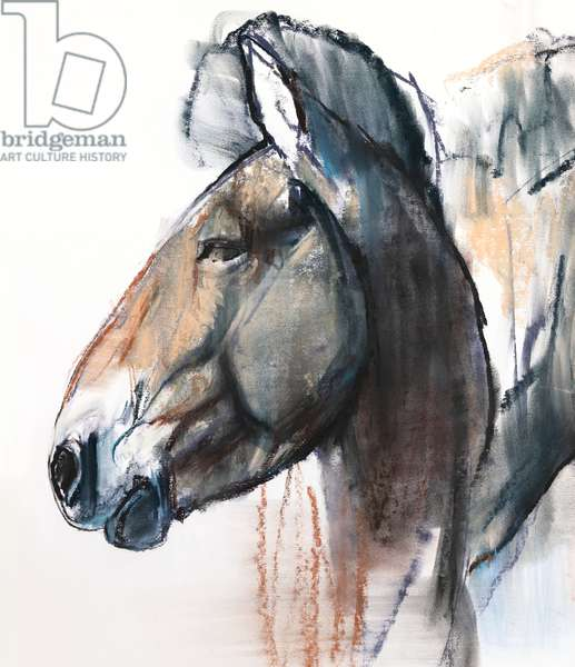 Head Study, Przewalski, 2013, (detail), (pastel and charcoal on paper)