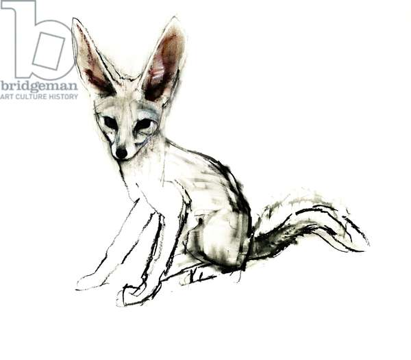 Foxy (Sand Fox), 2009 (conte & charcoal on paper)