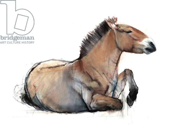 Seated Przewalski, 2011, (charcoal, conté and pastel on paper)