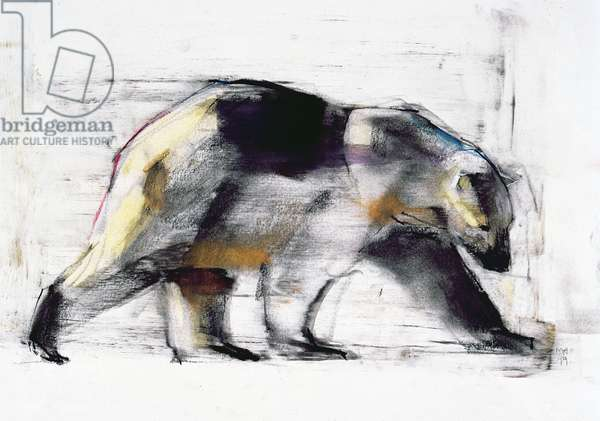 Ursus Maritimus, 1999 (charcoal & conte on paper)
