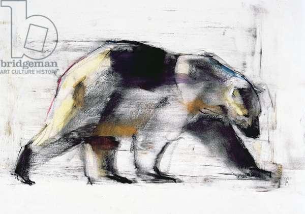 Ursus Maritimus, 1999 (charcoal & conte on paper)