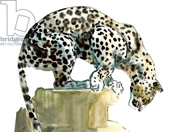 Spine (Arabian Leopard), 2015, (watercolour and gouache on paper)