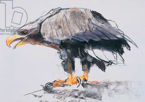 White tailed Sea Eagle, 2001 (charcoal & conte on paper)