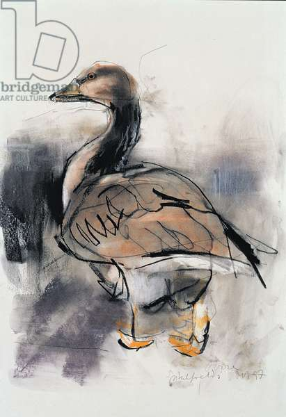Spitalfields Goose, 1997 (graphite and conte on paper)