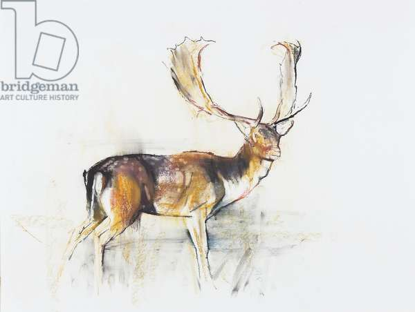 Study of a Stag (charcoal & conte on paper)