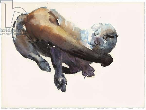 Otter Study I - 'Talisker' (w/c on paper)