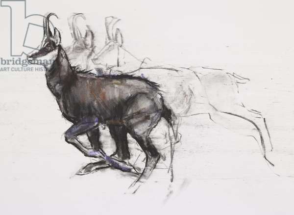 Running Chamois (charcoal & conte on paper)