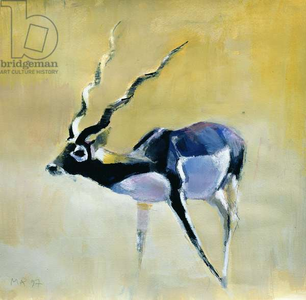 Black Buck, Velavadar, 1997 (mixed media on paper)