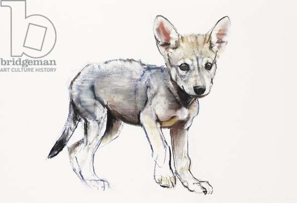 Hesitating Arabian Wolf Pup, 2009 (conte & charcoal on paper)