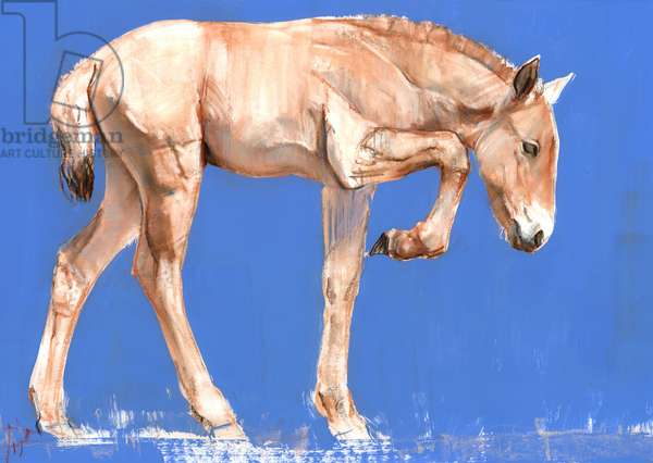 Przewalski Foal, 2012, (mixed media on paper)