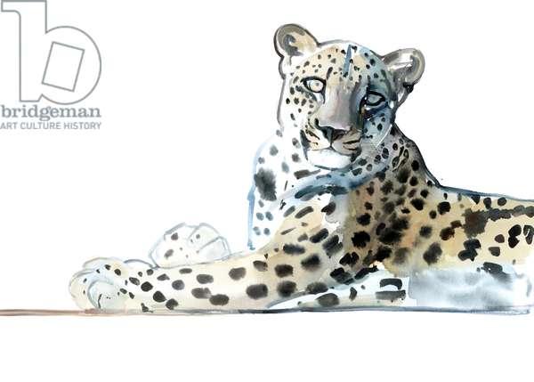 Tilt (Arabian Leopard), 2015, (watercolour and gouache on paper)