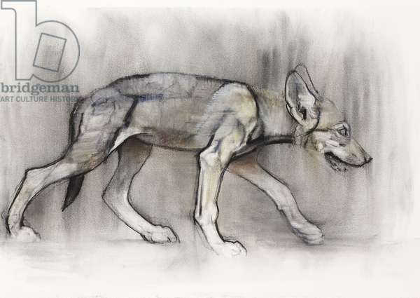 Lean Pup (Arabian Wolf), 2009 (conte & charcoal on paper)