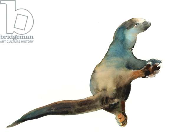 Cotman Otter, 2014, (watercolour on paper)