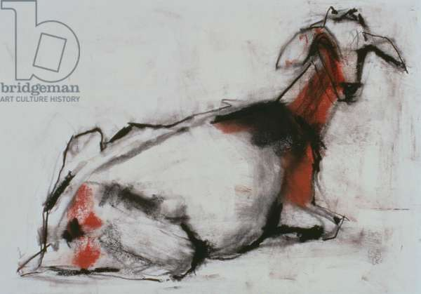 Seated Goat, 1998 (conte and charcoal on paper)