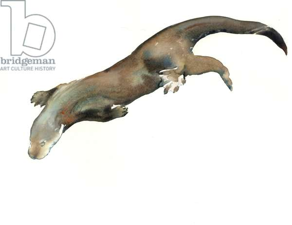 Young Otter, 2014 (watercolour on paper)