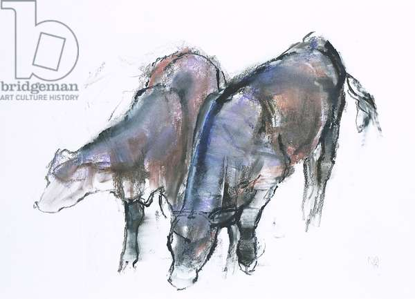 Calves, 2006 (charcoal & conte on paper)