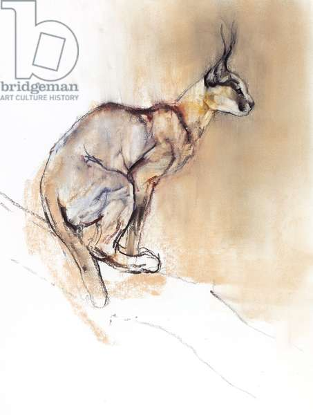 Seated Caracal, 2009 (conte & charcoal on paper)