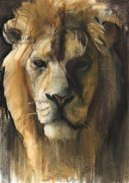 Asiatic Lion, 2015, (pigment, pastel and conté on paper)
