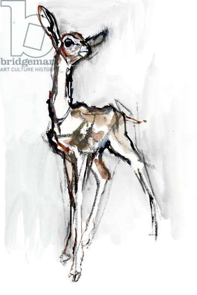 Gerenuk fawn, Sarara, 2018, (mixed media on paper)