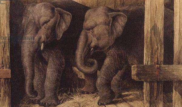 Two elephants, 1886 (w/c)