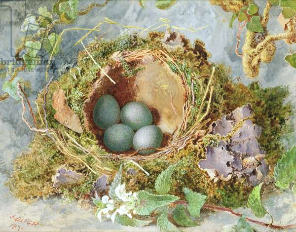 A Nest of Eggs, 1871 (w/c on paper) (see 215284 for pair)