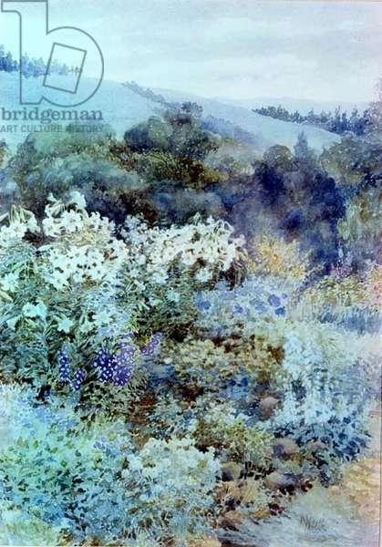 In a South African Garden, c.1900-10 (w/c)